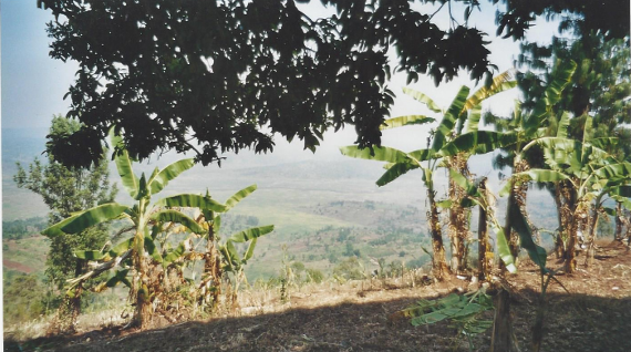 the valley of the Kanyaru and its papyrus swamps, and, beyond, much of the Ngozi province in Burundi